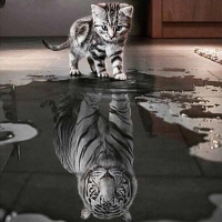 2019 latest hot pop diamond paintingCat and Tiger DIY 5D Diamond Embroidery Painting Cross Stitch Home Decor Craft