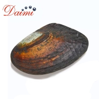 PRESALE DAIMI Open Pearl Mussel Random Pearl One-on-One Open Oyster Live Stream